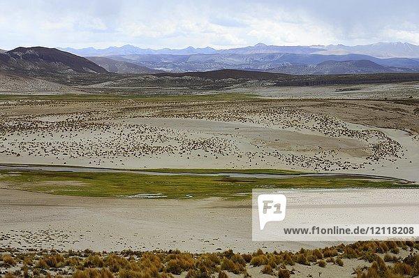 Hochebene mit Fluss auf 4000 m Meereshöhe  Uyuni  Potosí  Bolivien  Südamerika