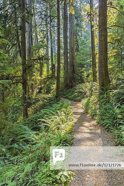 Quinault Rainforest Trail on South Shore Drive at Lake Quinault in Olympic National Park in Washington State in the United States.