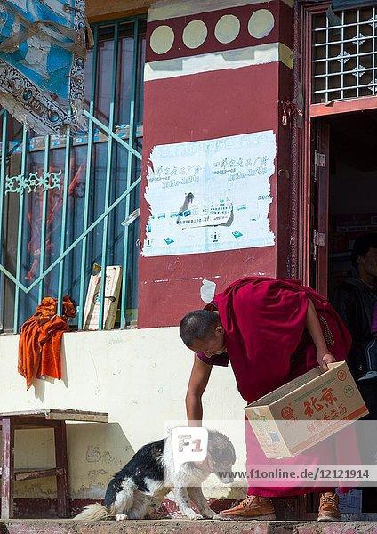 Tibetan Monk with a dog in Shachong monastery  Qinghai Province  Wayaotai  China.