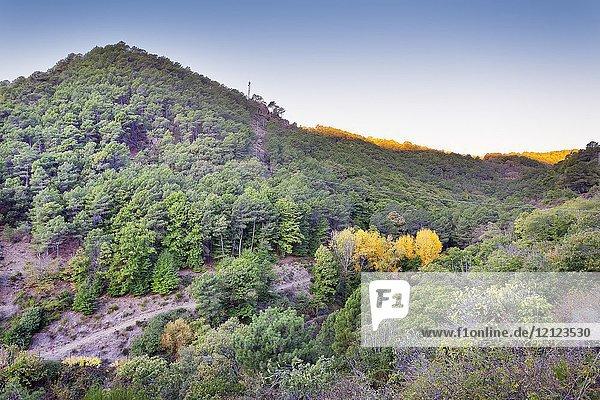 Pajarero hill. Sierra de Gredos. Avila. Spain