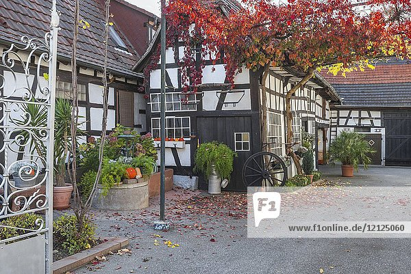 Half-timbered farming house and inner court with autumnal vine foliage decoration and autumnal garden in Seebach  small village in Northern Alsace  North Vosges  France  department Bas-Rhin  member of the association for towns and villages in bloom competition.