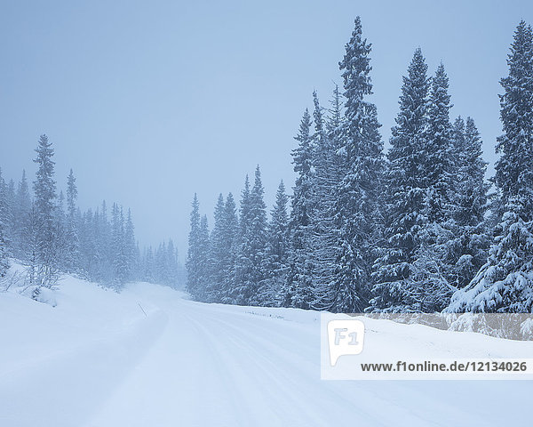 Rural road during winter in Fulufjallet National Park  Sweden