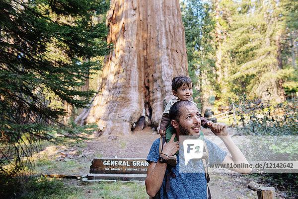 USA  Kalifornien  Vater und Baby zu Besuch im Sequoia Nationalpark