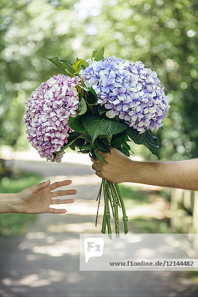Detail of man's hand giving a bouquet of hydrangeas to a woman