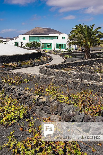 Exterior view  vineyard. Casa Museo del Campesino  monument to the Farmer. created by César Manrique. San Bartolome. Lanzarote Island  Canary islands  Spain  Europe.