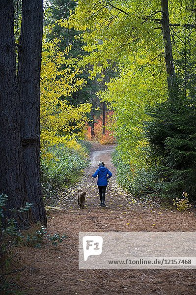 Woman (Model Release 20020923-10) with miniature Goldendoodle walking in the fall at Lake Wenatchee State Park in eastern Washington State  USA.