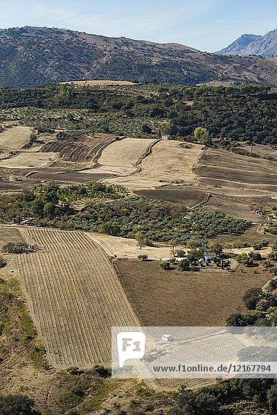 Farmlands  Ronda  Malaga  Spain.