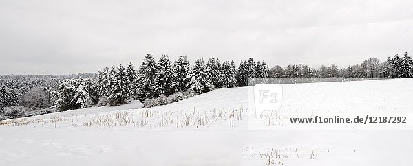 Winter country landscape with meadows and woods covered with fresh snow  shot in winter light in countryside near Horgen  Baden-Württemberg  Germany.