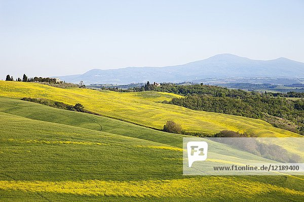 Landscape of the Val d' Orcia with the Amiata mountain  province of Siena  Tuscany  Italy  Europe.