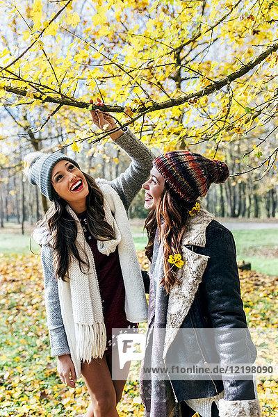 Zwei hübsche Frauen haben Spaß in einem herbstlichen Wald.