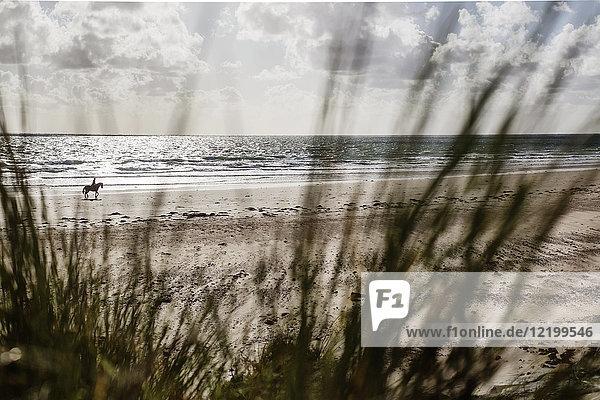 Frankreich  Normandie  Portbail  Contentin  Reiter am Strand von der Düne aus gesehen