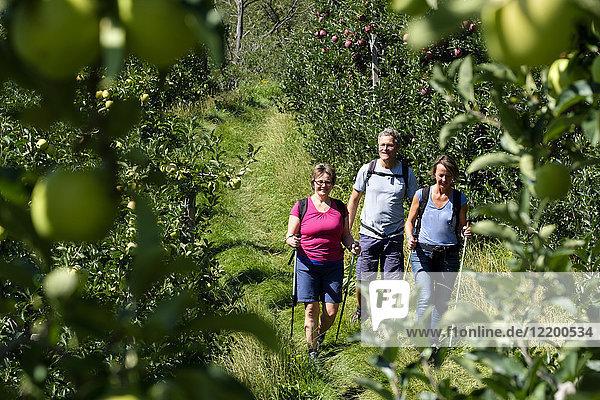 Italien  Südtirol  Vinschgau  Naturns  Apfelrinne  Wanderer