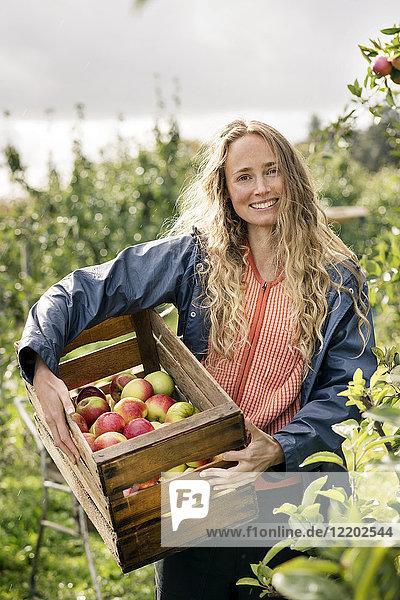 Lächelnde Frau erntet Äpfel im Obstgarten Lächelnde Frau erntet Äpfel im Obstgarten