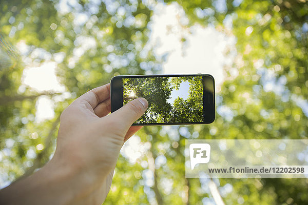 Man taking photos will cell phone in forest  close-up