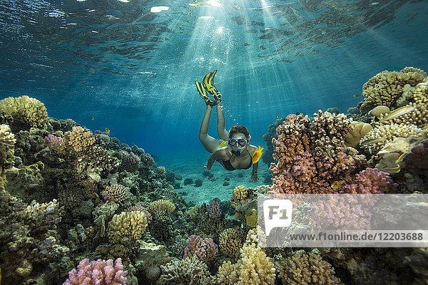 Egypt  Red Sea  Hurghada  teenage girl snorkeling at coral reef