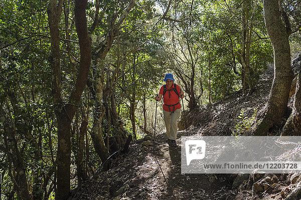 Spanien  Kanarische Inseln  La Gomera  Parque Natural de Majona  Wanderin im Lorbeerwald