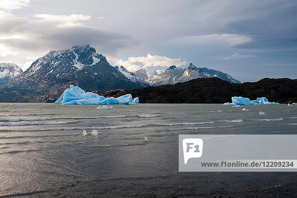 Icebergs on Grey Lake  Torres del Paine National Park  Patagonia  Chile