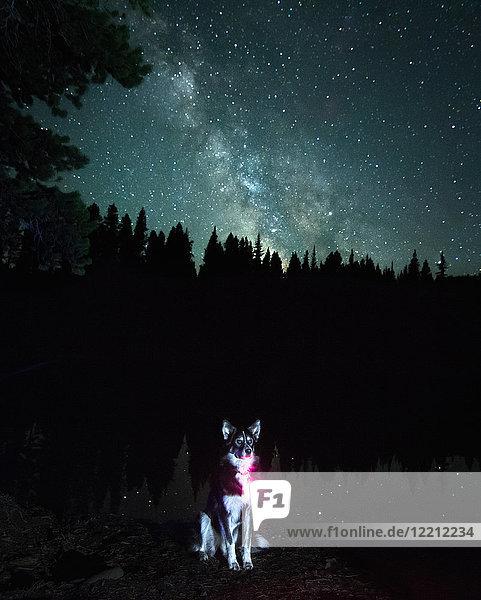 Porträt eines Hundes gegen die Milchstraßen-Galaxie  Nickel Plate Provincial Park  Penticon  British Columbia  Kanada