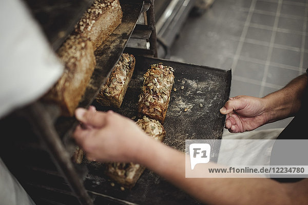 Mittelteil des Bäckers  der die frisch gebackenen Brote in einem Tablett auf einem Kühlregal in der Bäckerei aufbewahrt.