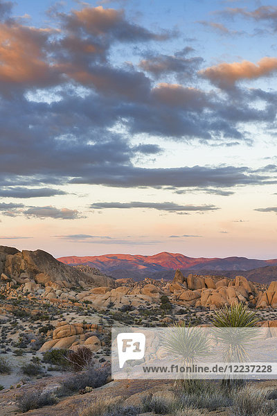 USA  California  Joshua Tree National Park  Desert with rock formations at sunset