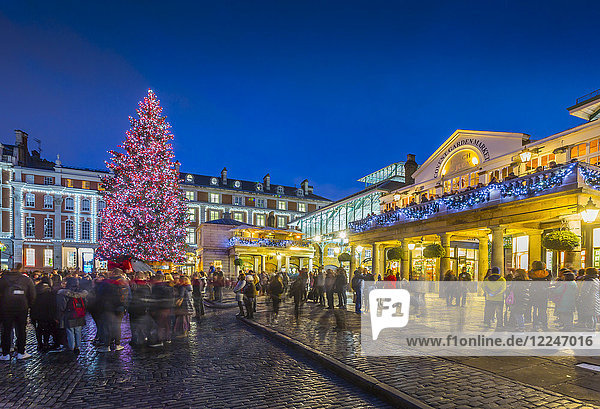View of Christmas Tree in Covent Garden at dusk  London  England  United Kingdom  Europe