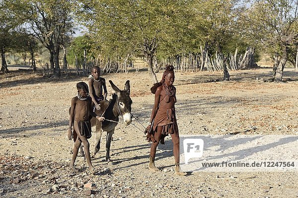 Verheiratete Himbafrau  Kindern reiten auf Esel  Kaokoveld  Namibia  Afrika