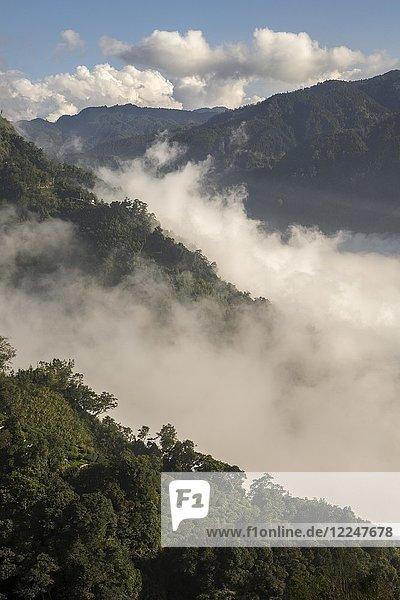 Teeplantage vor Wolkenmeer und Bergen  Nantou  Taiwan  China  Asien