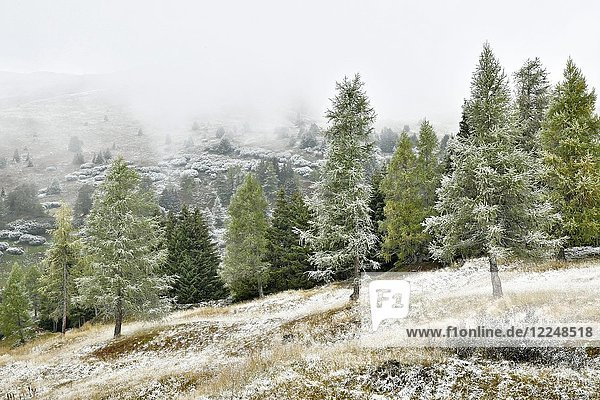 Mountain landscape with coniferous forest  first snowfall in autumn  Obernberg  Tyrol  Austria  Europe