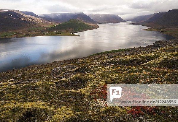 Herbststimmung am Fjord Dýrafjörður  Westfjorde  Island  Europa