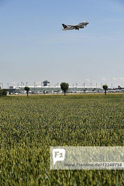 Feld mit Flughafengelände im Hintergrund  Flugzeug beim Start  Lufthansa Airbus A319  Flughafen München  Deutschland  Europa