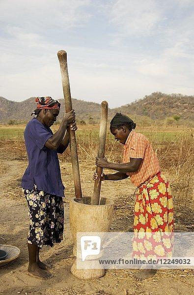 Tonga-Frauen beim Schlagen von Getreide  Lake Kariba  Sambia  Afrika