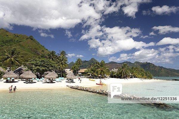 Strand mit Sonnenschirmen und Palmen  Hilton Hotel  Moorea  Pazifik  Gesellschaftsinseln  Französisch Polynesien