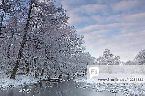 Wetland landscape with snow-covered trees in winter  Biosphere Reserve Middle Elbe  Dessau-Roßlau  Saxony-Anhalt  Germany  Europe