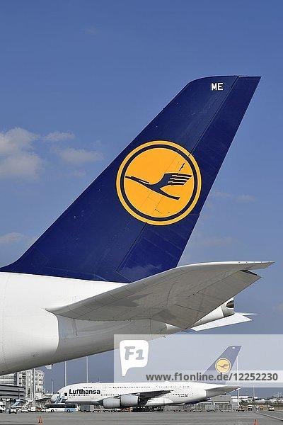 Zwei Airbus  A380-800  Lufthansa  auf Parkposition  Logo auf Heckflügel  Flughafen München  Oberbayern  Bayern  Deutschland  Europa
