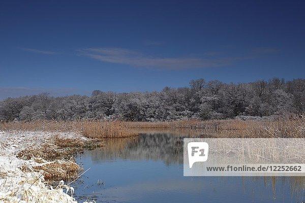 Wetland landscape in winter  Biosphere Reserve Middle Elbe  Dessau-Roßlau  Saxony-Anhalt  Germany  Europe