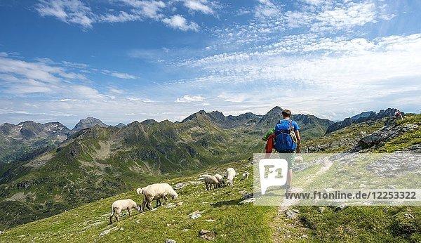 Wanderer und Schafe  Schladminger Höhenweg  Schladminger Tauern  Schladming  Steiermark  Österreich  Europa