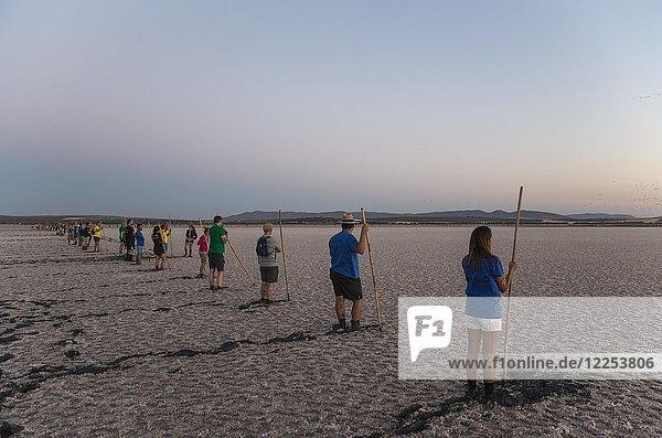 Freiwillige zur Beringung der Rosaflamingos (Phoenicopterus roseus) im Morgengrauen an der Laguna de Fuente de Piedra  Provinz Malaga  Andalusien  Spanien.