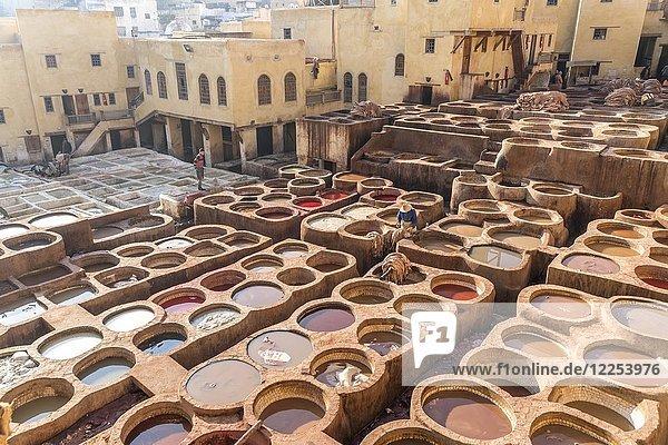 Becken mit Farbe zum Färben von Leder  Färberei  Gerberei Tannerie Chouara  Gerber- und Färberviertel Fes el Bali  Fes  Marokko  Afrika