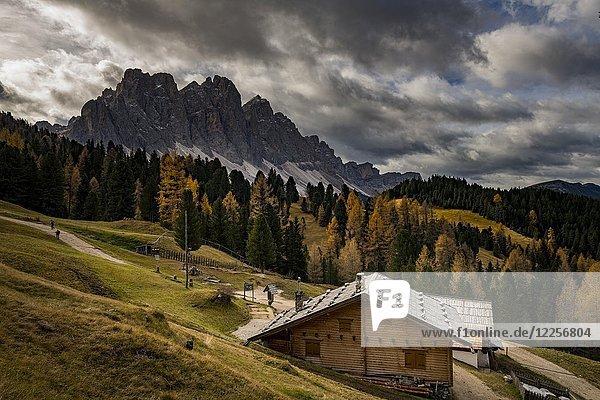 Geislerspitzen mit Lärchenwald (Larix) und Berghütte im Herbst  Villnößtal  St. Magdalena  Südtirol  Italien  Europa