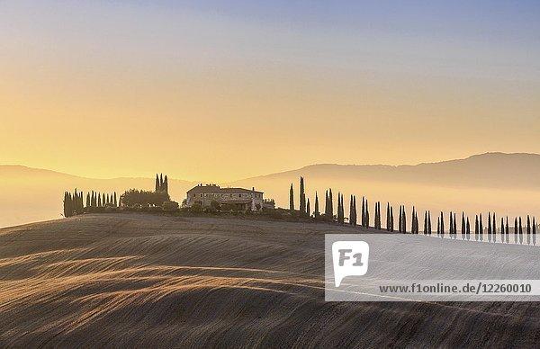 Toskanische Landschaft mit Zypressen-Allee und Bauerngehöft in der Morgendämmerung  San Quirico d'Orcia  Val d'Orcia  Toskana  Italien  Europa