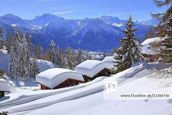 Winterlandschaft mit tief verschneiten Chalets  hinten Gipfel Fletschhorn  3985m  Dom  4545m und Matterhorn  4478m  Riederalp  Aletschgebiet  Oberwallis  Wallis  Schweiz  Europa
