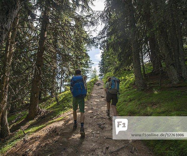 Wanderer auf Wanderweg im Wald zum Hochwurzen  Schladminger Höhenweg  Schladminger Tauern  Schladming  Steiermark  Österreich  Europa Wanderer auf Wanderweg im Wald zum Hochwurzen, Schladminger Höhenweg, Schladminger Tauern, Schladming, Steiermark, Österreich, Europa