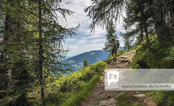Wanderin auf dem Wanderweg im Wald zum Hochwurzen  Schladminger Höhenweg  Schladminger Tauern  Schladming  Steiermark  Österreich  Europa
