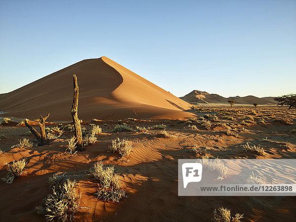 Afrika  Namibia  Namib-Naukluft Nationalpark  Namibwüste  Wüstendünen