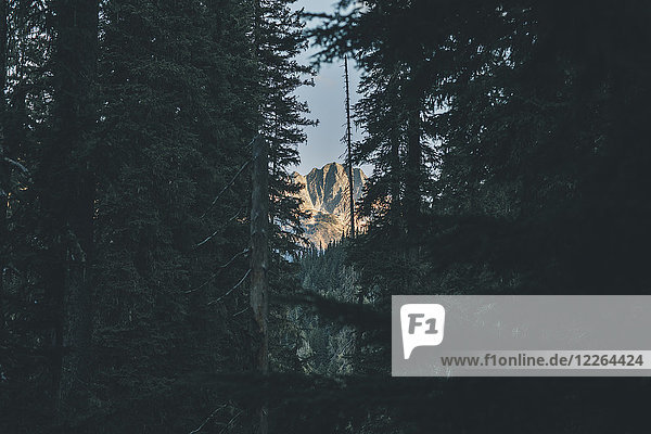 Kanada  British Columbia  Columbia-Shuswap A  Glacier National Park  Berge und Bäume