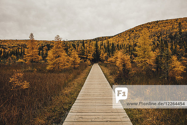 Kanada  British Columbia  Liard River Hot Springs Provincial Park  Holzsteg im Herbst