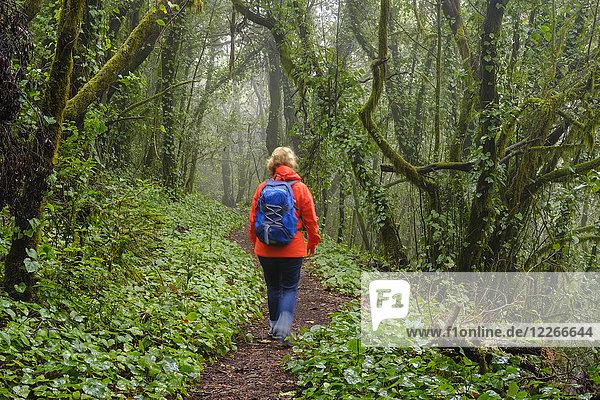 Spanien  Kanarische Inseln  La Gomera  Frau beim Wandern durch den Nebelwald im Nationalpark Garajonay