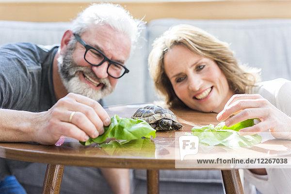 Glückliches reifes Paar füttert Schildkröte zu Hause