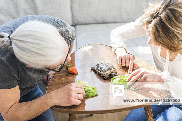 Reife Paare füttern Schildkröte zu Hause