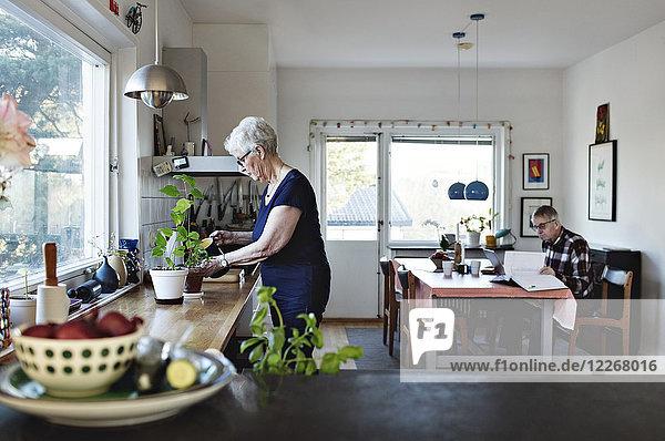 Seitenansicht der Seniorin beim Gießen von Topfpflanzen auf der Küchentheke zu Hause